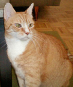 new york city cat sitting testimonial