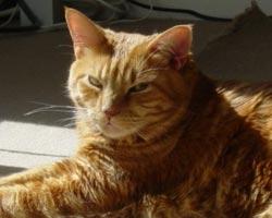 Queens cat sitting testimonial