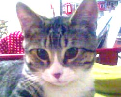 Manhattan cat sitting