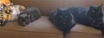 New York cat sitting services