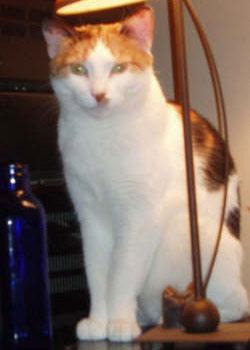 testimonials for Manhattan cat sitters
