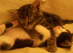 Testiomonial for Katie's Kitty pet sitting of New York City