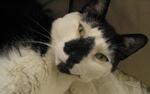 Manhattan cat sitter testimonial