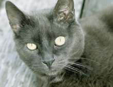 Bronx cat sitting testimonial