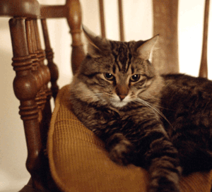 kittens charleston sc