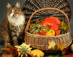 Not all Thanksgiving food is good for cats.