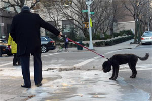 Dogs electrocuted in New York City due to melting snow, ice, and metal surfaces
