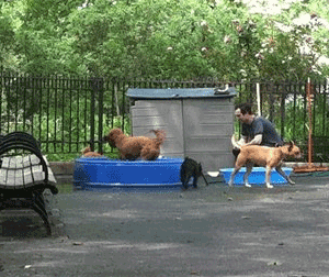 New York City dog parks
