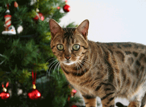 keep your cat safe during the holidays
