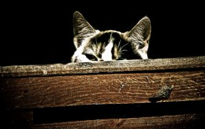 Why does my cat bury food? - NYC pet sitters