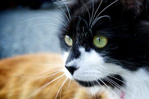 How to tell if your cat has seasonal allergies - NYC pet sitters