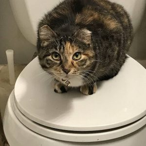 Should You Flush Your Cat S Litter Nyc Pet Sitters