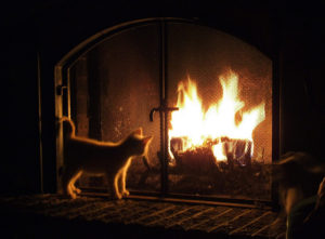 Why do cats stare at fire? , NYC pet sitters