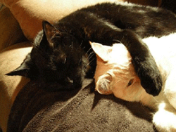 Hell's Kitchen and West Village cat sitter providing quality cat care while you are away.