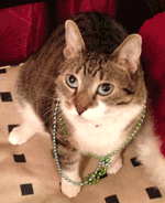 Cat Sitter offering cat sitting services in Forest Hills and Jamaica and surrounding areas